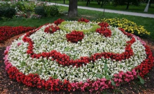 Лучшие низкорослые цветы для клумбы, цветущие все лето