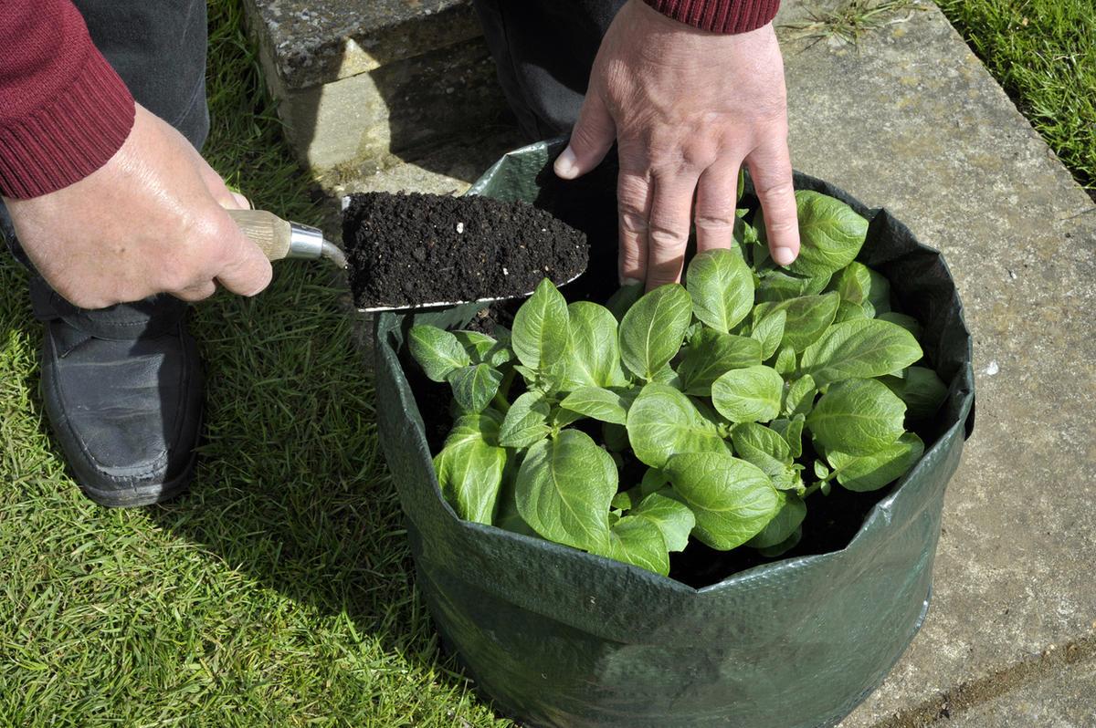 Огород в контейнерах: растим овощи в старых ведрах и тазах