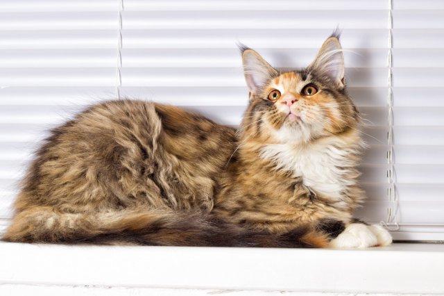 10 интересных фактов о кошках, о которых вы и не подозревали