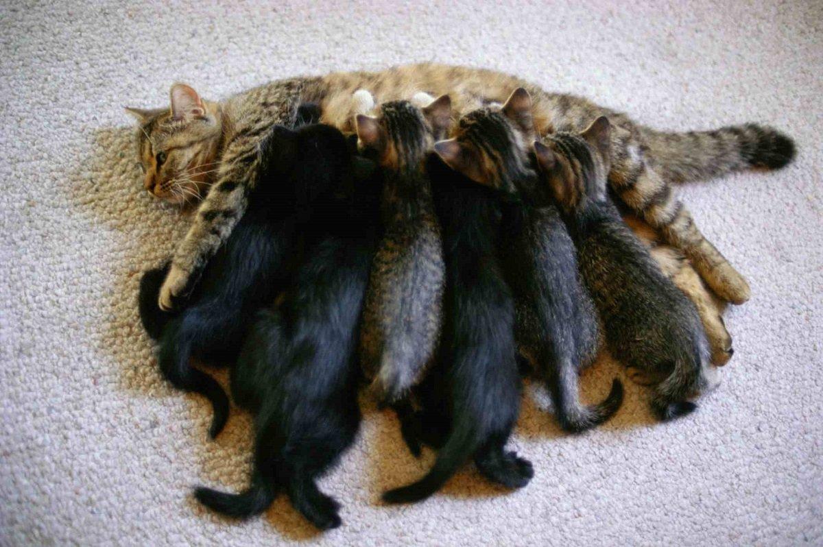 """Cum arată pisicile că te iubesc - 11 """"iubesc"""" în limba pisicii"""