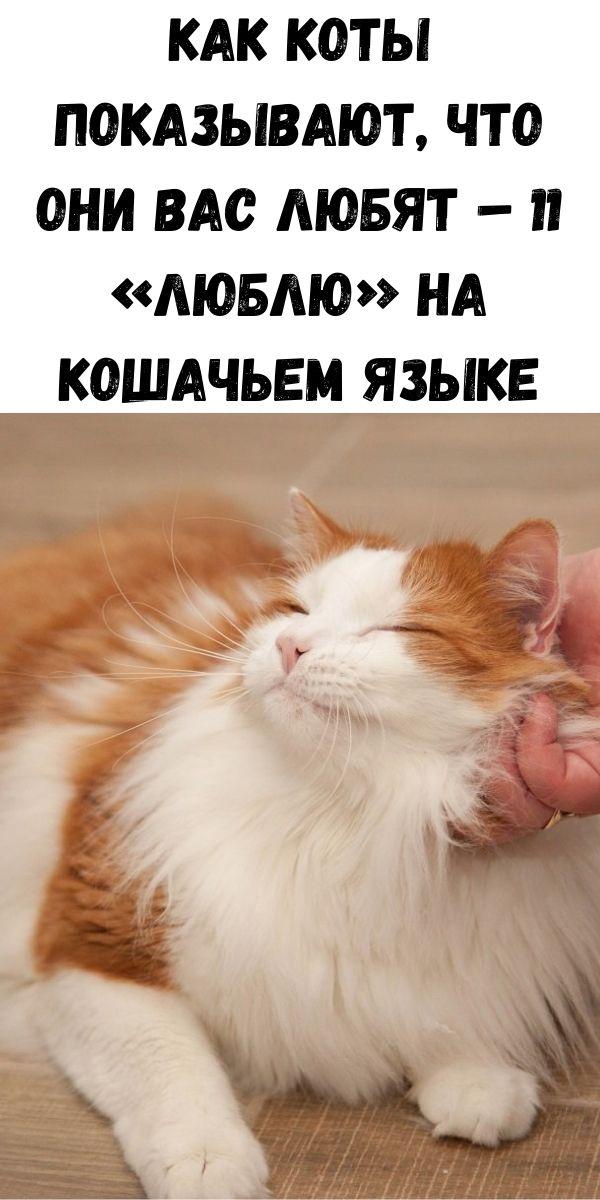 Как коты показывают, что они вас любят – 11 «люблю» на кошачьем языке