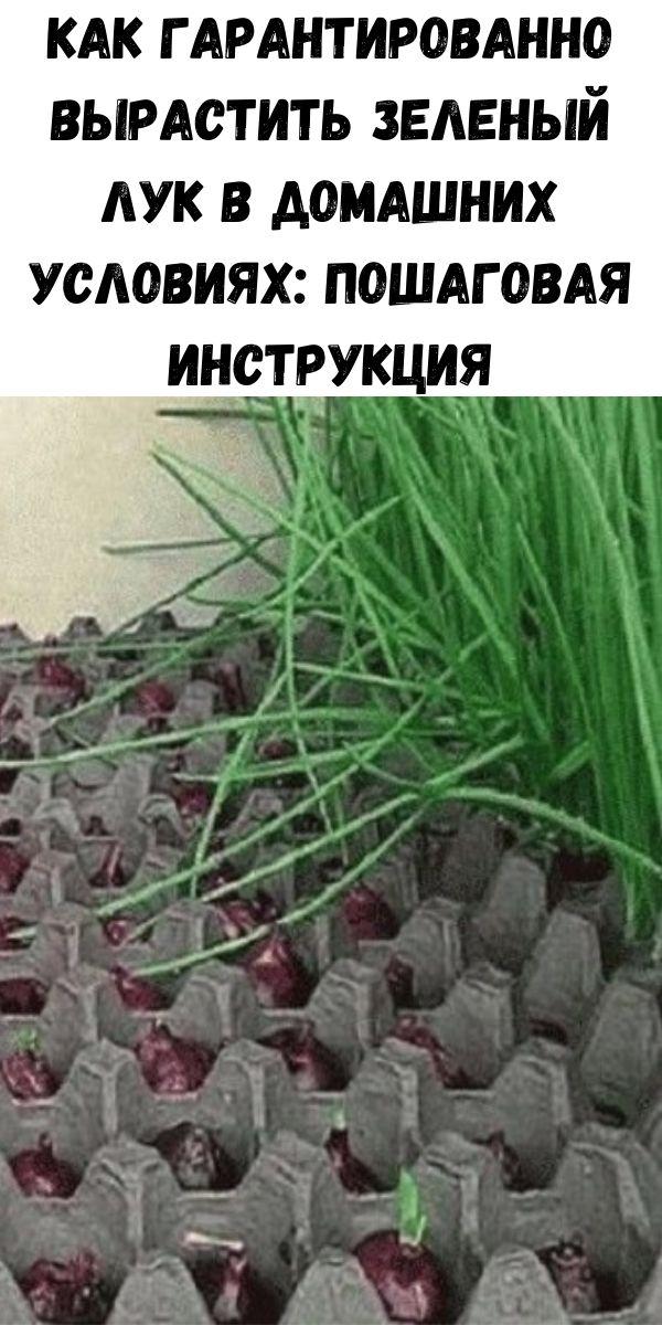 Как гарантированно вырастить зеленый лук в домашних условиях: пошаговая инструкция