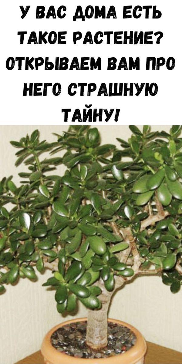 У вас дома есть такое растение? Открываем вам про него страшную тайну!