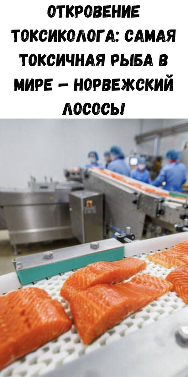 Откровение токсиколога: самая токсичная рыба в мире — норвежский лосось!