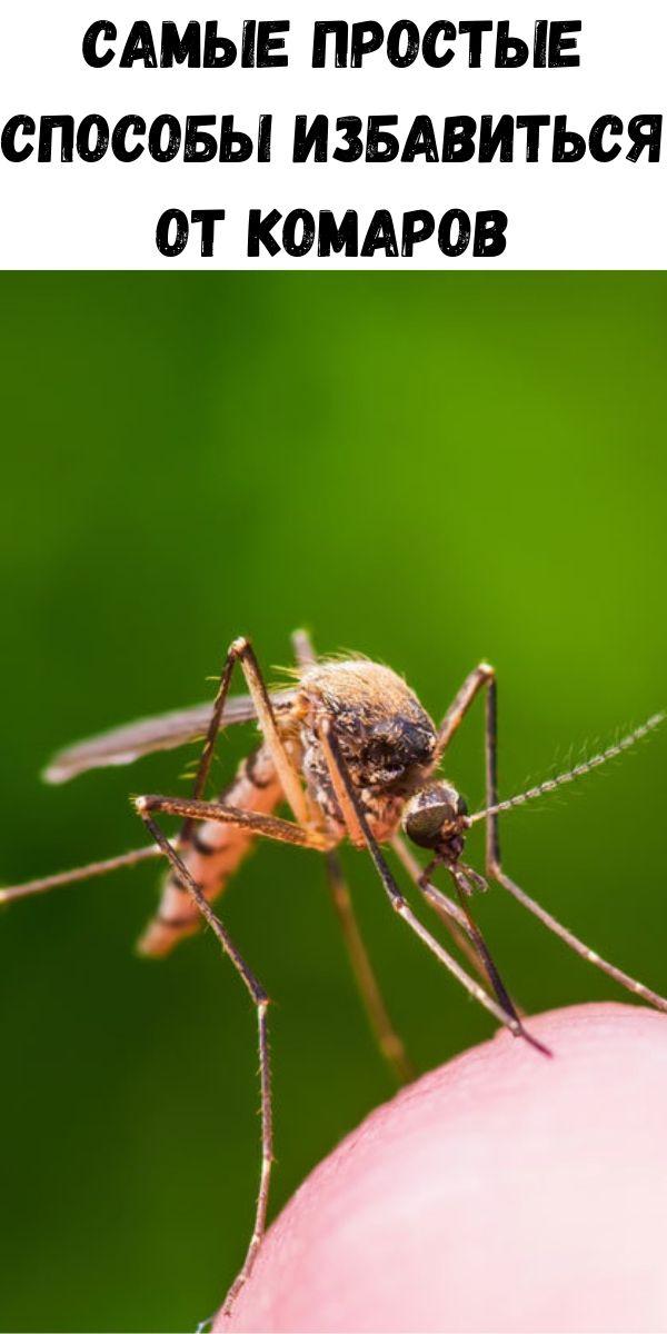 Самые простые способы избавиться от комаров