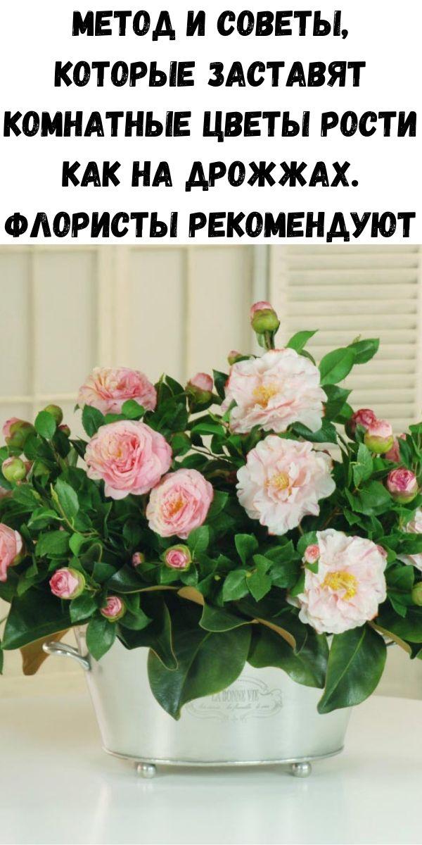 Метод и советы, которые заставят комнатные цветы рости как на дрожжах. Флористы рекомендуют