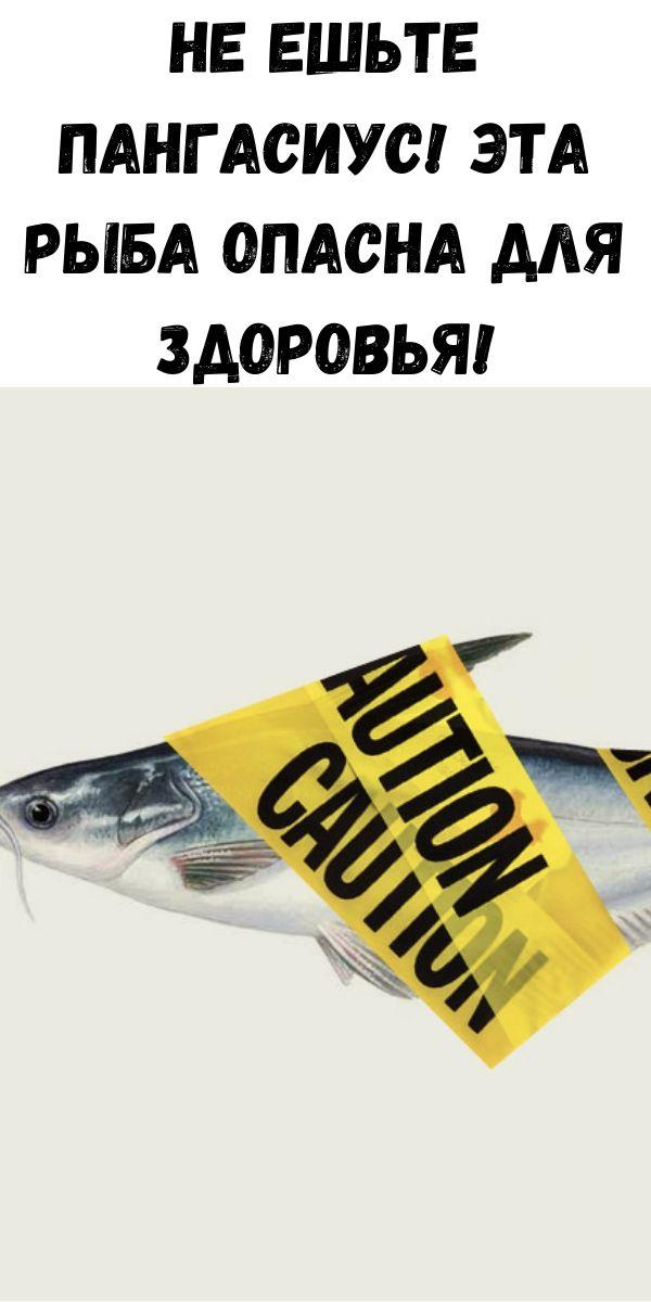 Не ешьте Пангасиус! Эта рыба опасна для здоровья!