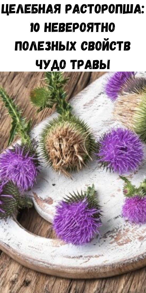 Целебная расторопша: 10 невероятно полезных свойств чудо травы