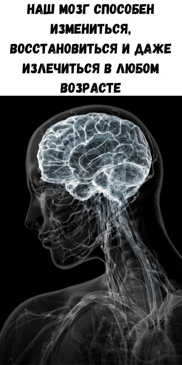 Наш мозг способен измениться, восстановиться и даже излечиться в любом возрасте