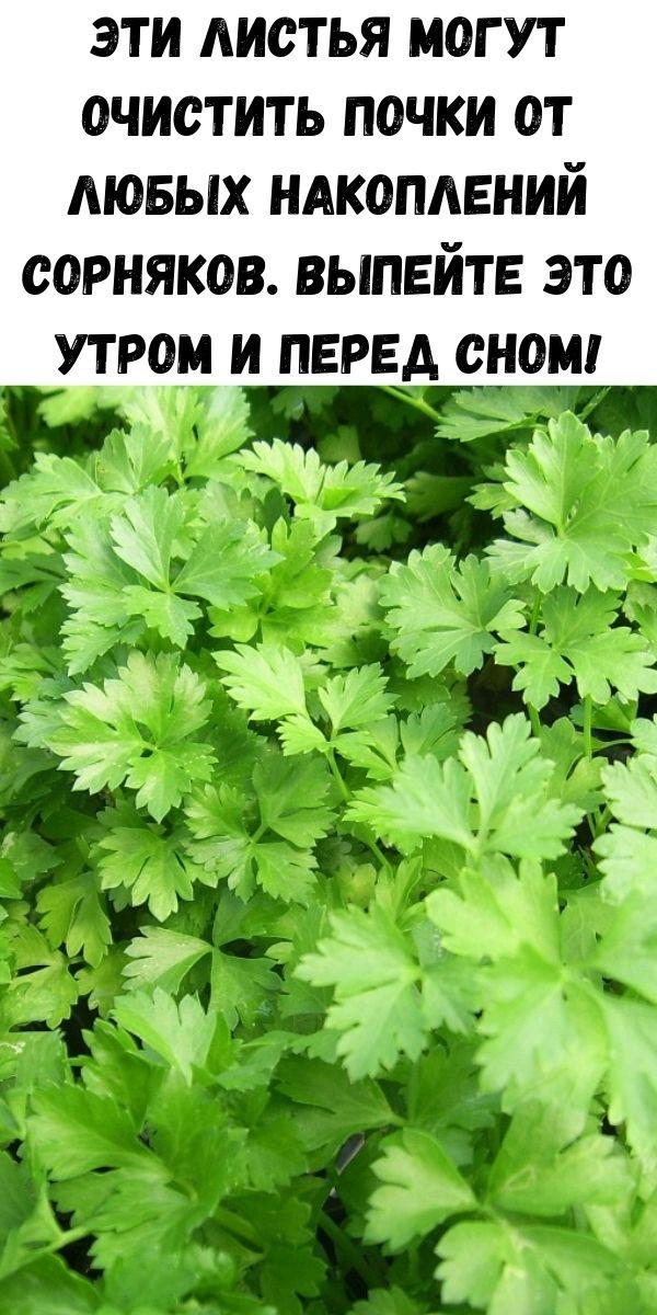 Эти листья могут очистить почки от любых накоплений сорняков. Выпейте это утром и перед сном!