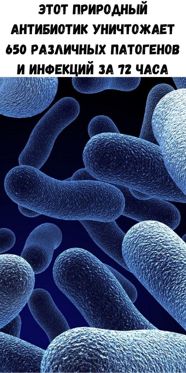 Этот природный антибиотик уничтожает 650 различных патогенов и инфекций за 72 часа