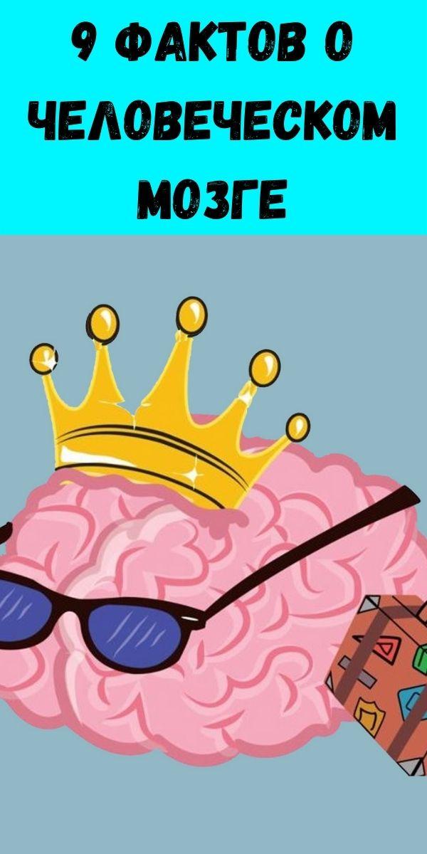 9 фактов о человеческом мозге