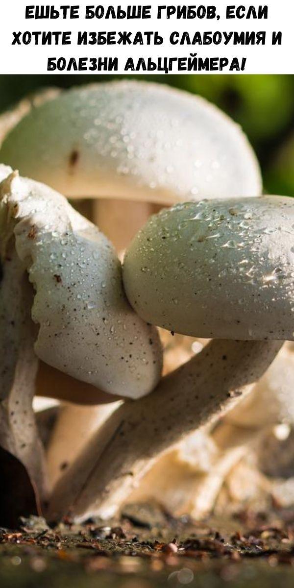 Ешьте больше грибов, если хотите избежать слабоумия и болезни Альцгеймера!