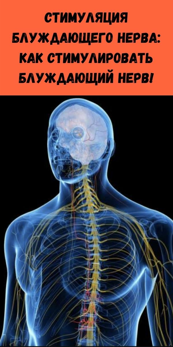 Cтимуляция блуждающего нерва: как стимулировать блуждающий нерв!