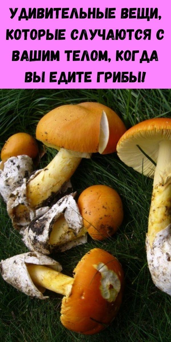 Удивительные вещи, которые случаются с вашим телом, когда вы едите грибы!