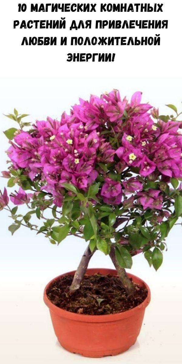 10 магических комнатных растений для привлечения любви и положительной энергии!