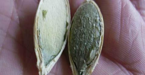 Эти семена уничтожают рак, улучшают зрение и заставляют вас быстро уснуть!