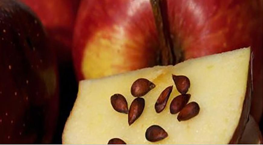 4 вида семян с большой антиканцерогенной силой. Вы будете удивлены!