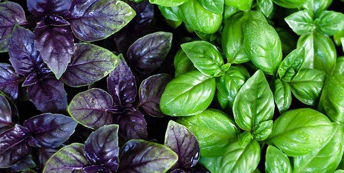5 растений, которые привлекают положительную энергию