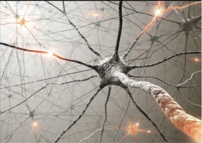 Продукты, которые успокаивают нервную систему