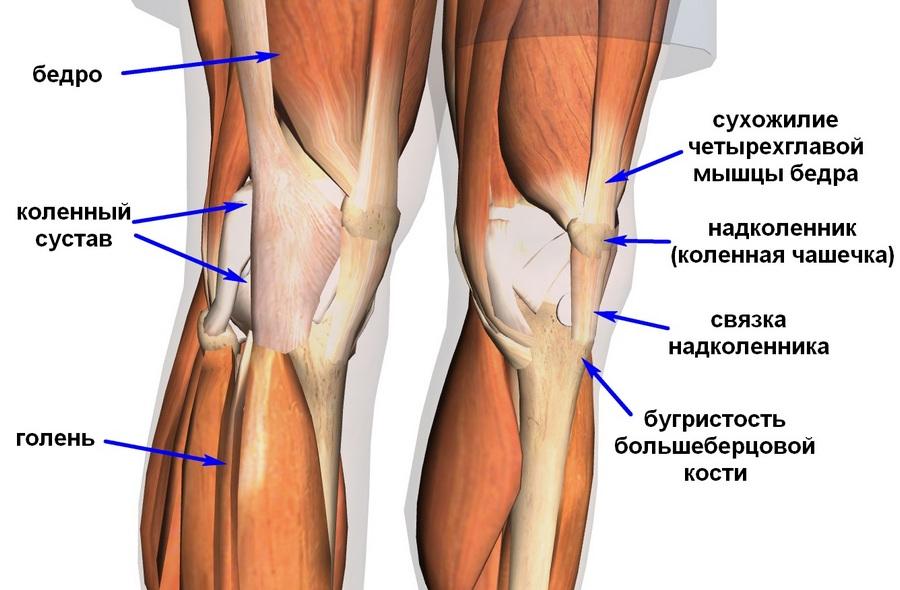 Как обновить свои кости, сухожилия и суставы всего за одну неделю!