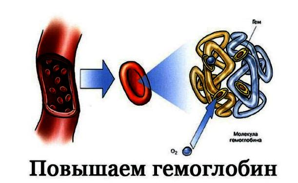 7 главных продуктов для повышения гемоглобина