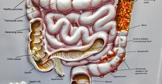 Как бактерии в кишечнике влияют на наш разум