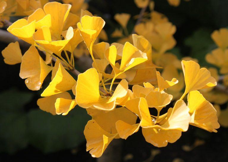 4 вида трав, которые защищают ваш мозг от депрессии, тревоги и болезни Альцгеймера