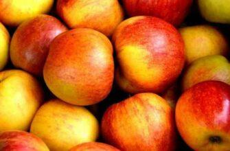 Как потерять 10 кг за 7 дней с невероятной яблочной диетой